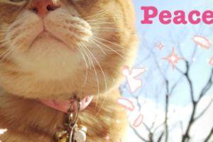 シンプルに、ネコまっしぐら☆