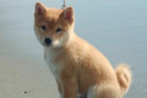 熊本地震で被災したペット300匹の飼い主見つからず・・・管理センターパンク寸前