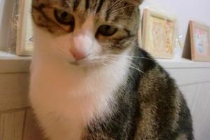 猫カフェでびゅー