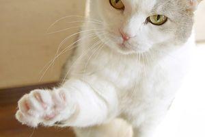 お喋りな招き猫