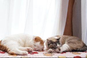 かご猫 Blog