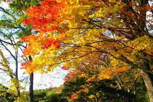紅葉も見どころを過ぎ季節は冬に