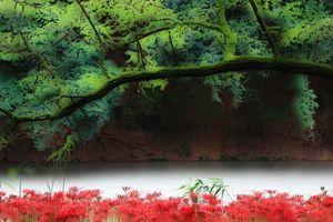 「水元公園」検定委員会:【番外編】:【彼岸幻想 #1】