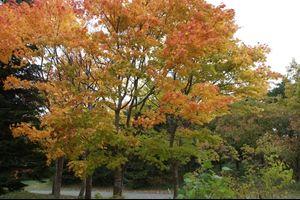 秋の川下公園・1