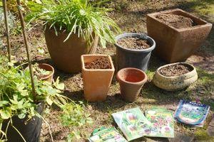 春咲き球根の植え付け。