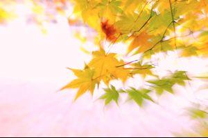 「秋色彩彩」  秋は華やかに 艶やかにフィナーレする