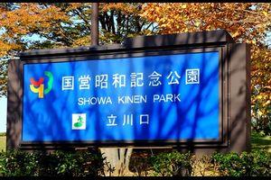 昭和記念公園    黄葉を見に行ってきました!