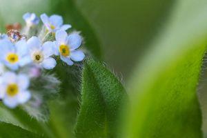 野草の花 (3)