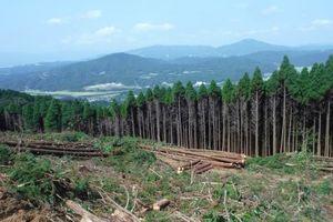 伊万里木材市場 直営班の現場