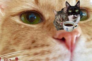 *招き猫家*