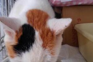 シニア猫と暮らす