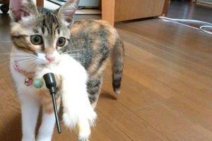 「とってこい」にハマる子猫