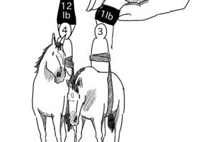 欧州競馬、1990年以来となる年齢別斤量の変更に着手