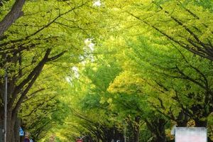 札幌市内 紅葉 もう散ったかと思われました、が