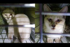 2016年11月30日仔猫保護&ビーコのその後
