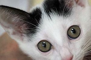 つるみ・猫のカギしっぽ