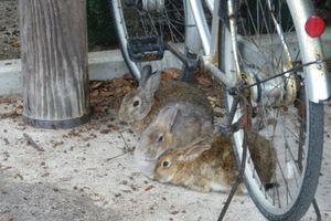 毒ガスとウサギ。