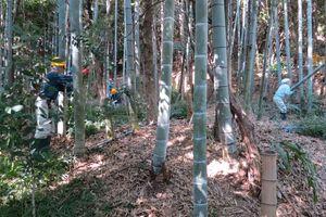 竹やぶ整備+α