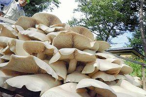 【埼玉キノコ神社】神社の境内、巨大キノコがニョキニョキ、見物人ゾロゾロ
