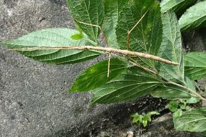 今年の夏から9月中旬に、出会った生き物たち(昆虫編)