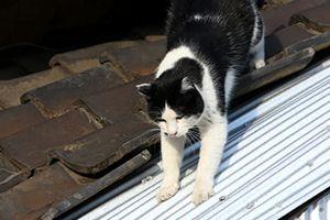 猫写2016(119)