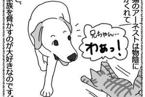 羊の国のラブラドール絵日記シニア!!