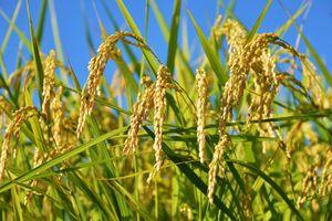 13★明日は福山会場です!!日本の農業を変え世界の食を正すマスターマンドの会