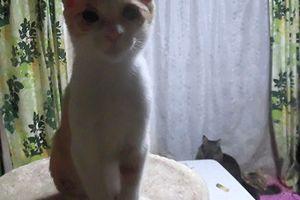 猫も人も大好き、甘えん坊のんちゃんの里親募集
