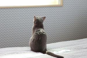 猫。どしちゃったの、ちゅんぼ子ちゃん