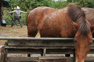 馬とニャンコと男と女