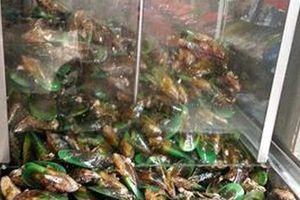 敬老の日のプレゼントは緑イ貝のサプリメントに決めました!