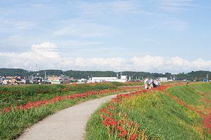 今年も矢勝川の彼岸花を撮りにいく <前>