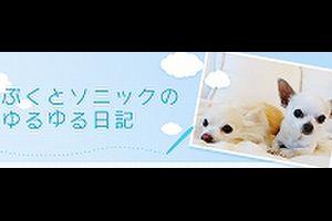 ちわわん生活 VOL.2