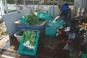 農業ボランティア