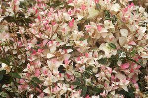 グリーンパークの花々 (続2)