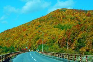 10月紅葉と11月のカラマツ黄葉