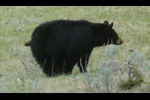 熊がよく出没する国立公園まとめ