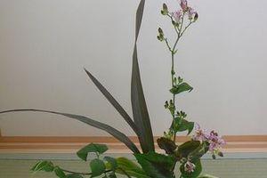 生け花と種まき