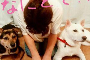 「野犬も常に全頭譲渡を目指している倉敷市保健所にフードの支援をお願いします~岡山県」