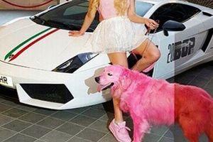「ピンクに染められたゴールデン・レトリバー~レバノン」