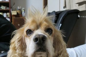 矢野酒造 愛犬