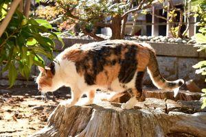 千葉のとあるお寺の猫(02.12)~その5