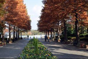 晩秋の長居植物園をぶらり散策・・・