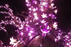 第5回いわき光のさくらまつり 点灯式の様子 [平成28年12月4日(日)更新]