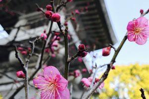 寒空の中に咲く花