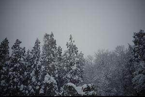 冬がやって来た・・・