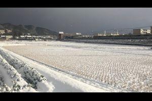大雪(このあたりにしては) - Heavy Snow -