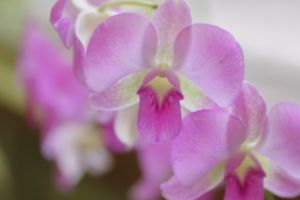 寒い日には熱帯植物園♪(Part1)@夢の島熱帯植物園
