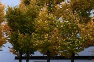 【拡散】【デモ】【パナマ文書】【マスゴミ】12/04 反 タックスヘイブン 抗議オフ 報告