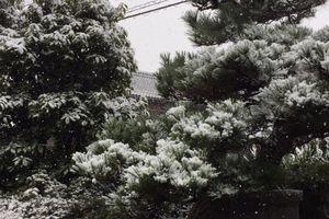 この冬、初雪。